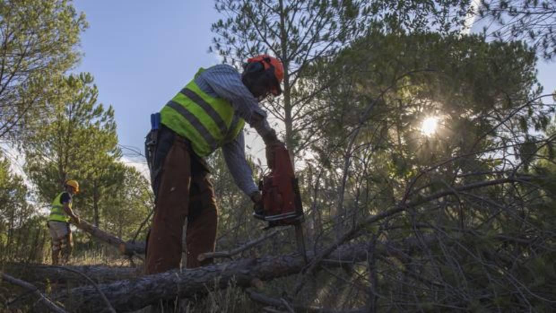 La Administración puede obligar a los parados a limpiar montes o reparar daños de incendios