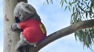 La otra cara del GP de Australia