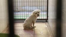 Los animales abandonados en Sevilla que buscan ser adoptados