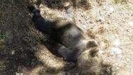 Las cifras del oso