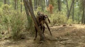 El director de la reserva declara mañana por la muerte de los dos bisontes decapitados
