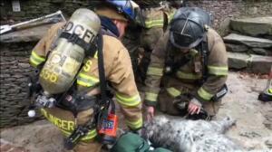 Bomberos salvan la vida a un perro al rescatarle de un incendio en Washington