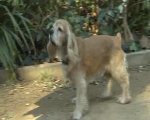 Lanzan la primera vacuna contra la Leishmaniosis Canina en Europa