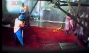 Crueldad en el matadero