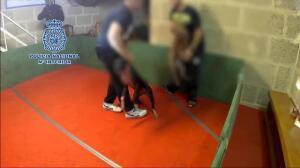 Operación policía contra las peleas ilegales de perros