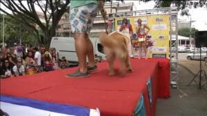 Río de Janeiro celebra un año más el 'Blocao', su famoso carnaval canino