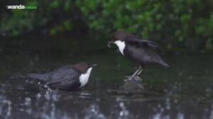 'Cantábrico', refugio casi virgen de la última fauna autóctona de la Península