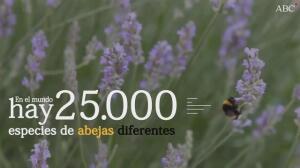 Las abejas en cifras