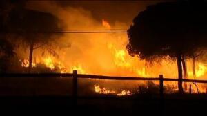 El incendio de Moguer alcanza el Espacio Natural de Doñana