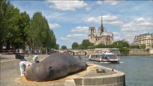 Una ballena aparece en París, a orillas del Sena