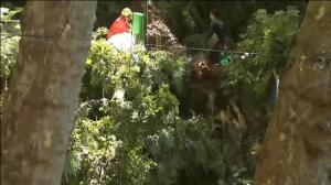 Al menos 13 fallecidos y más de 50 heridos por la caída de un árbol en Madeira