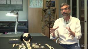 Juvenil Neandertal CSIC