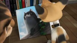 Trailer 'Gatos. Un viaje de vuelta a casa'