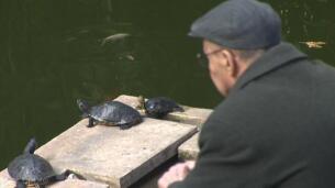 Las tortugas de la Estación de Atocha dicen adiós tras más de 20 años