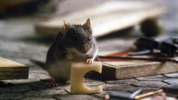 Resultado de imagen de un ratoncito duro de roer